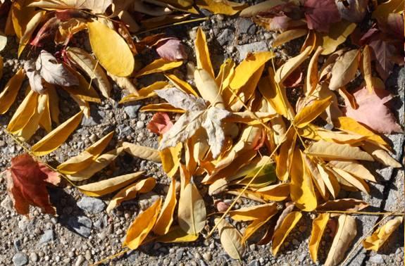 leaves5